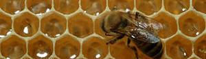 натуральный пчелиный мед рекомендую при псориазе