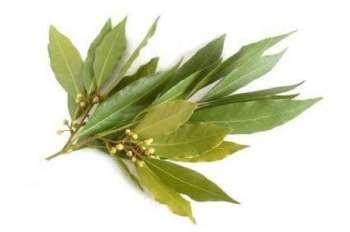 Растение - лавровый лист, один из способов победить алкоголизм