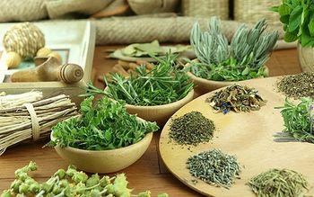 Рецепты настоев из трав, древесной коры и почек