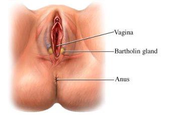 Воспалившиеся гланды бартолинита в организме у женщины