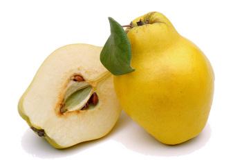 Айва - близкий родственник яблок и груш
