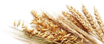 Пшеничный отвар