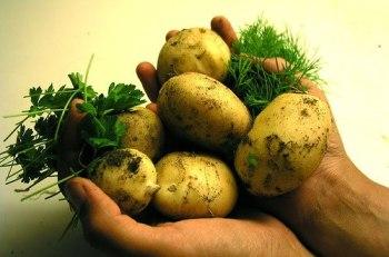 Растяжение мышц рук, картофель