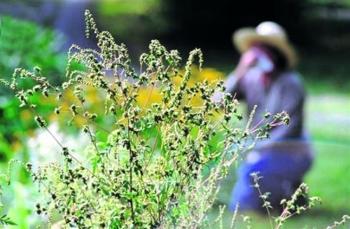 Самые известные растения-аллергены