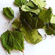 Сухие листья березы