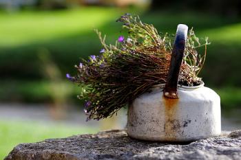 Травяной сбор для лечения уреплазмы