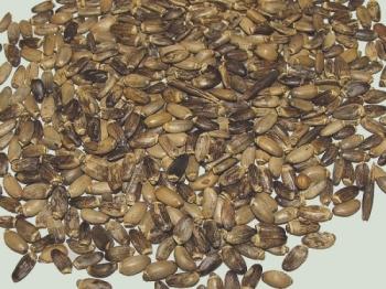 Врачи-фитотерапевты рекомендуют лечить любые заболевания печени, в том числе гепатомегалию, с помощью растения под названием расторопша