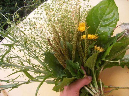 Комнатные растения лечат людей
