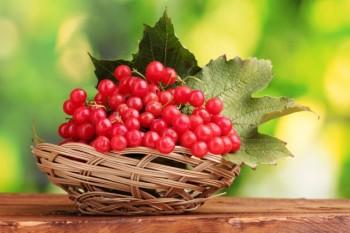 Калина - главная ягода при полипах