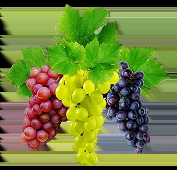 Отвар виноградных веточек