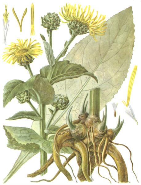 девясил от аллергии отзывы