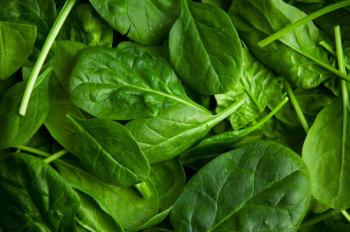 Шпинат: в чем польза растения в лечении?