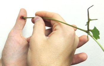 Лечение соком растений