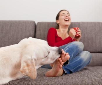 Собака вылечит бородавки