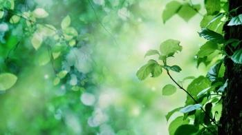 Припарки из листьев