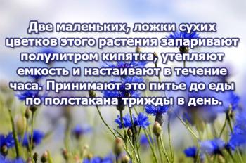 Цветы полевого василька в лечении сердечной аритмии