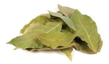Лавровый лист - эффективное средство в лечение отита