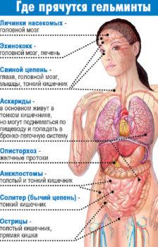 Места обитания гельминтов в организме человека