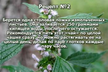 Рецепт №2 из пустырника