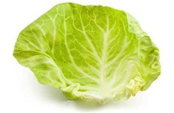 Для лечения мастопатии выбирайте только свежие листья