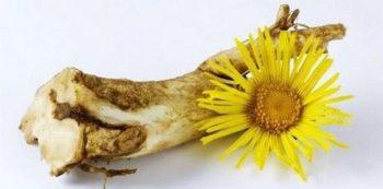 Корень девясила - отличное средство для лечения атеросклероза сосудов головного мозга