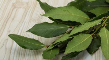 Лавровый лист оказывает хорошее противовоспалительное воздействие и устраняет рези, жжение и выделение слизи